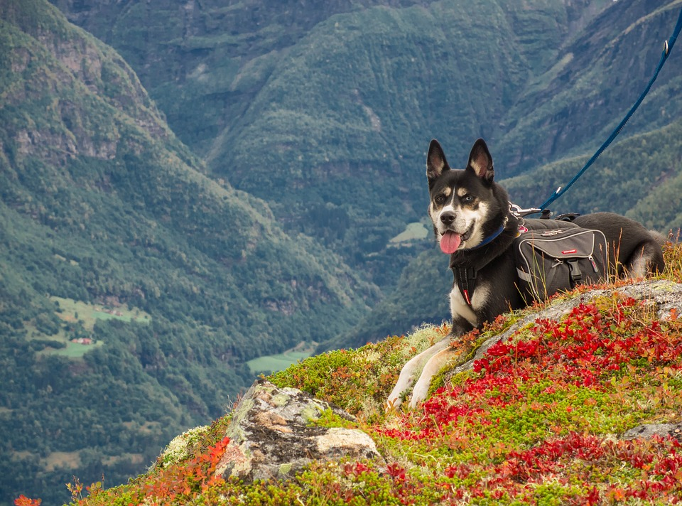 Rescue dog mountains